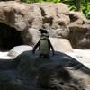 ヒルトンに住んでいる、あきらかに偉そうなペンギン